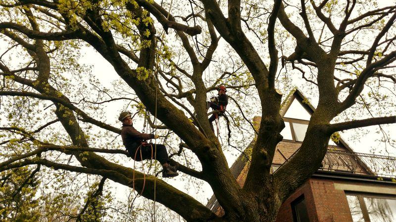 Kletterausrüstung Baumpflege : Alfred kath söhne gmbh · baumpflege