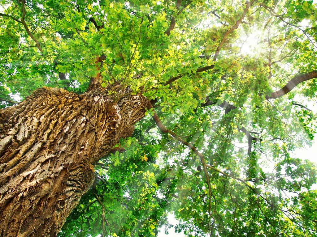 Kletterausrüstung Baumpflege : Alfred kath & söhne gmbh · baumpflege